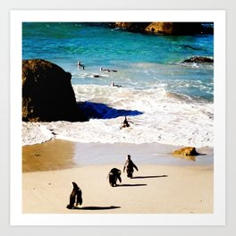 Boulders Beach Penguins Art Print