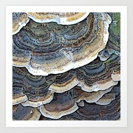 Turkey Tail Fungi Art Print