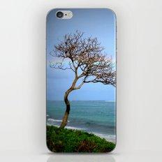 Kauai Rainbow iPhone & iPod Skin