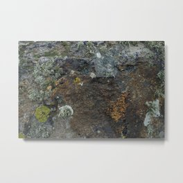 Natural Coastal Rock Texture with Lichen and Moss Metal Print