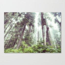 Dreamy Forest Fog Canvas Print