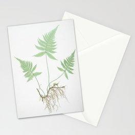 Botanical Beech Fern Stationery Cards