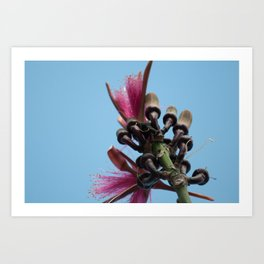Coquitos in Bloom Art Print