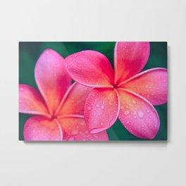 Aloha Hawaii Kalama O Nei Pink Tropical Plumeria Metal Print