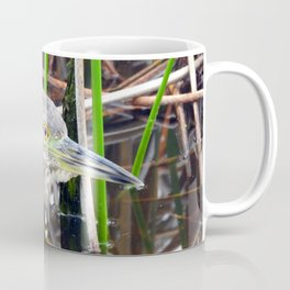 Juvenile Black Crowned Night Heron Coffee Mug