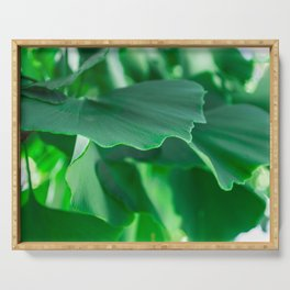 Ginkgo biloba leaves Serving Tray
