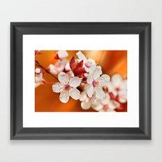 Spring 240 Framed Art Print