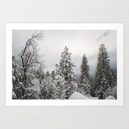 Snowy Tree Tops Art Print