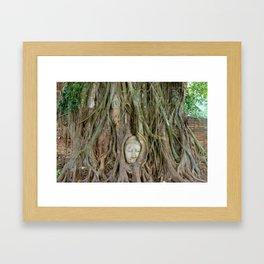 Buddha Head in Tree Roots Framed Art Print