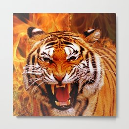 Tiger and Flame Metal Print
