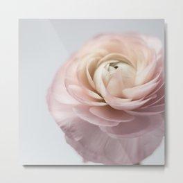 pink ranunculus #society6 #decor #buyart Metal Print