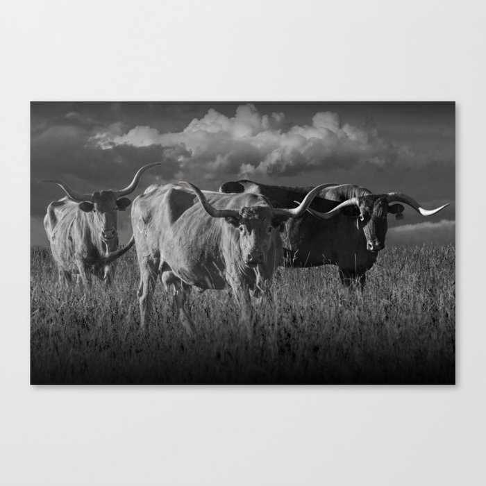 Texas Longhorn Steers Under A Cloudy Sky In Black White Canvas