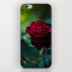 Single Red Rose iPhone & iPod Skin