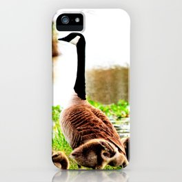 Canada Goose and Goslings iPhone Case
