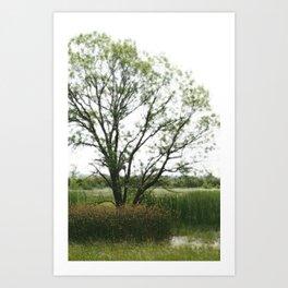 Tree amid reeds Art Print