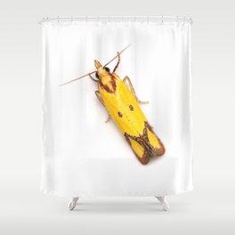 Sulphur Knapweed Moth (Agapeta zoegana) Shower Curtain