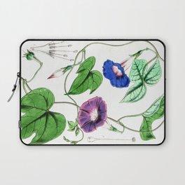 A Purging Pharbitis Vine in full blue and purple bloom - Vintage illsutration Laptop Sleeve