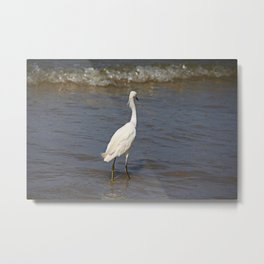 Seaside Scrutiny Metal Print