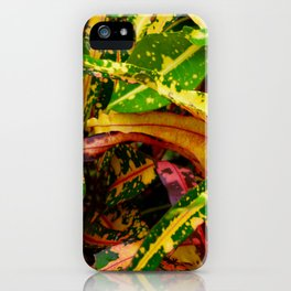 Tropical Croton Plant iPhone Case