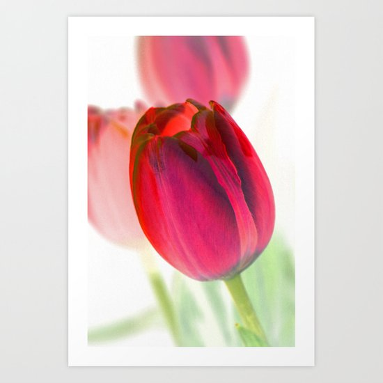Crimson Tulips Art Print