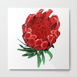 Beautiful Protea Flower - Wonderful Australian Native Flower Metal Print