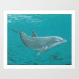 """""""Shallow Reef"""" by Amber Marine ~ Dolphin Art ~ Acrylic Painting, (Copyright 2014) Art Print"""