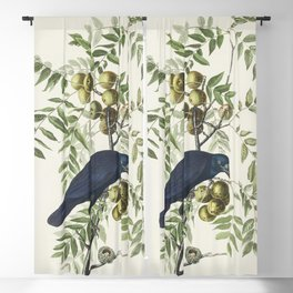 American Crow from Birds of America (1827) by John James Audubon etched by William Home Lizars Blackout Curtain