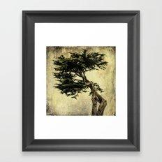 Cypress Tree Framed Art Print