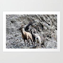 Big Horn Sheep in the Rockies 2 Art Print