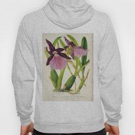 Miltonia Spectabilis Vintage Botanical Floral Flower Plant Scientific Illustration Hoody