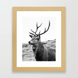 The Stag on the hill - b/w Framed Art Print
