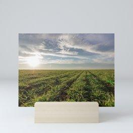 Wheat seedlings growing in a field. Young green wheat growing in soil. Mini Art Print