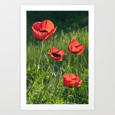 Dream of Red Poppies Art Print