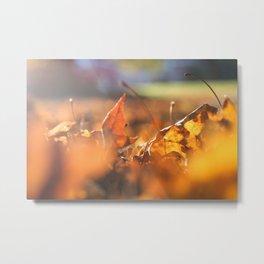 Golden fall Metal Print