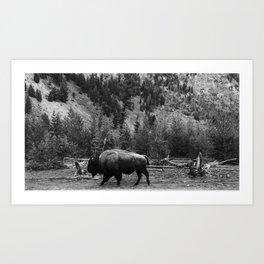 Bison Roaming in Black & White Art Print