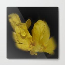 just a little drop - forsythia blossom on black Metal Print