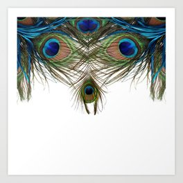 BLUE-GREEN PEACOCK FEATHERS WHITE ART Art Print