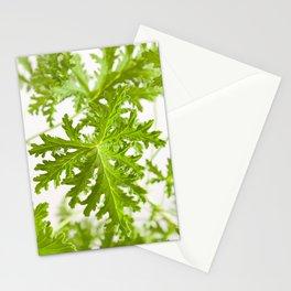 Pelargonium citrosum plant foliage macro Stationery Cards