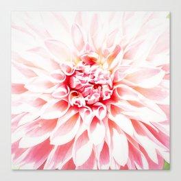 Pale Pink Dahlia Canvas Print