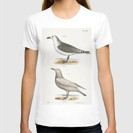 285 American Gull (Larus zonorhyncus) 286 Winter Gull (Larus argentatus)  from Zoology of New York ( T-shirt