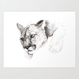 Sketch Of A Captived Mountain Lion Art Print