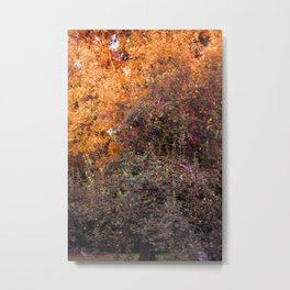 Johnny Appleseed Tree Metal Print