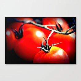 Tomatos Canvas Print