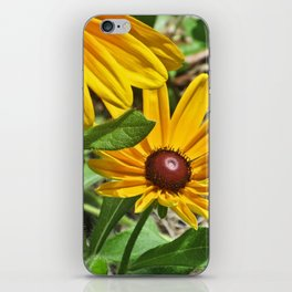 Black-eyed Susans and a Busy Bee iPhone Skin
