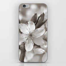 Spring 299 iPhone & iPod Skin