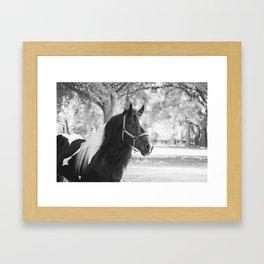 Stunning Gypsy Vanner Framed Art Print
