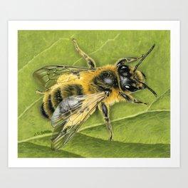 Honeybee On Leaf Art Print