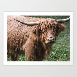 Cow Photography | Farm Animals | Nature Art Print