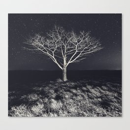 Branching Into The Stars Canvas Print