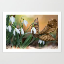Opposites new and old in the garden Art Print